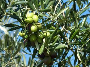 foglie con olive