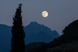 luna piena sullo sfondo e cipresso in primo piano