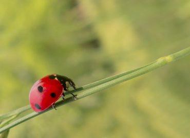 UNA SANA ALIMENTAZIONE – 5: biologicità